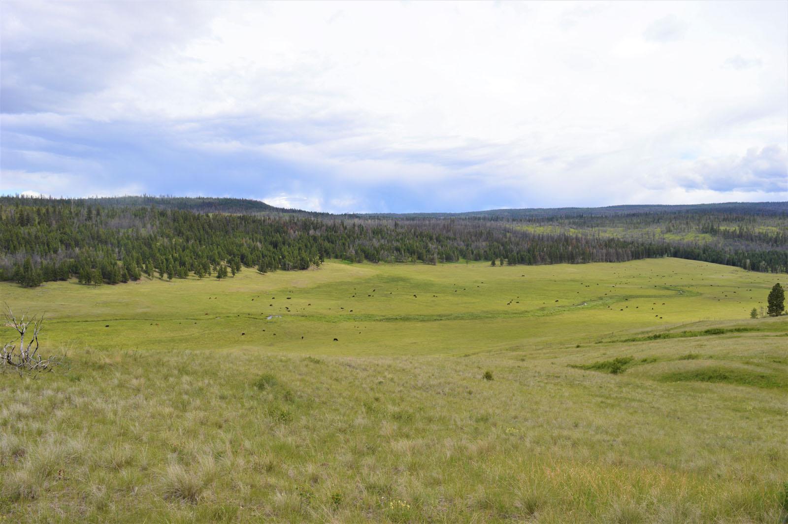Loon lake ranch 32