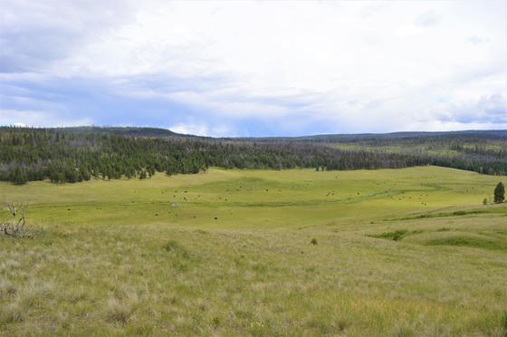 Thumb loon lake ranch 32