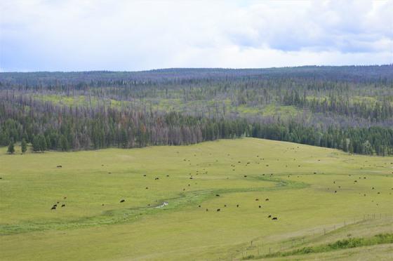 Thumb loon lake ranch 33