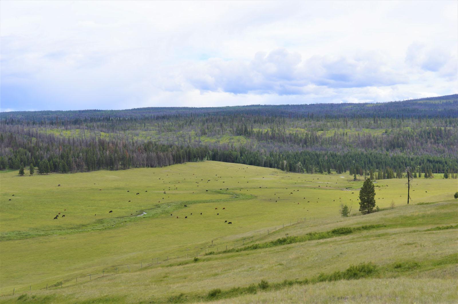 Loon lake ranch 34