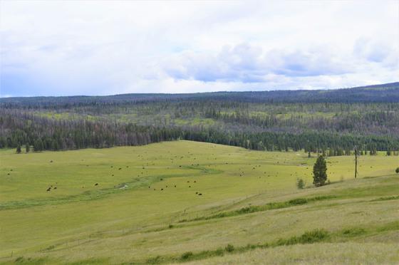 Thumb loon lake ranch 34