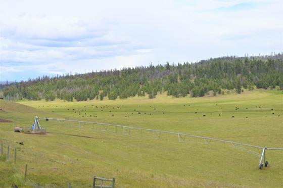 Thumb loon lake ranch 35
