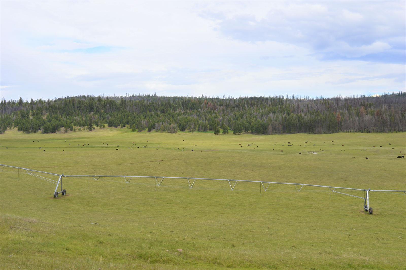 Loon lake ranch 36