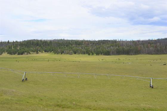Thumb loon lake ranch 36