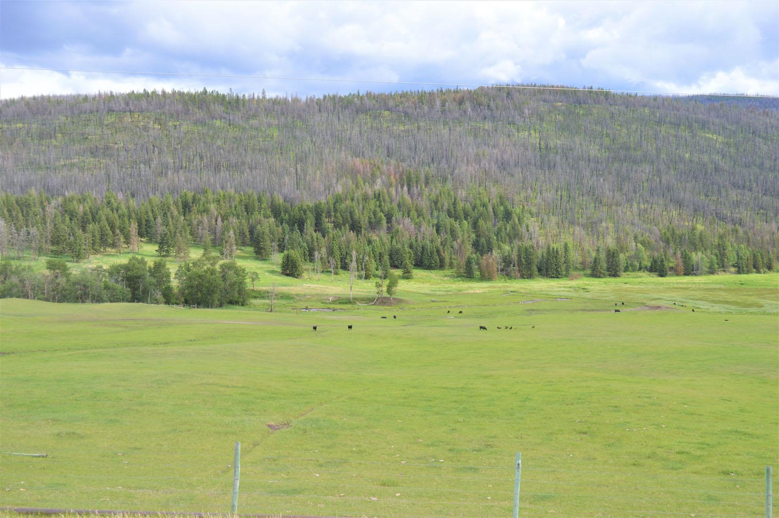 Loon lake ranch 42