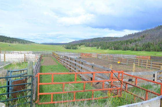 Thumb loon lake ranch 46