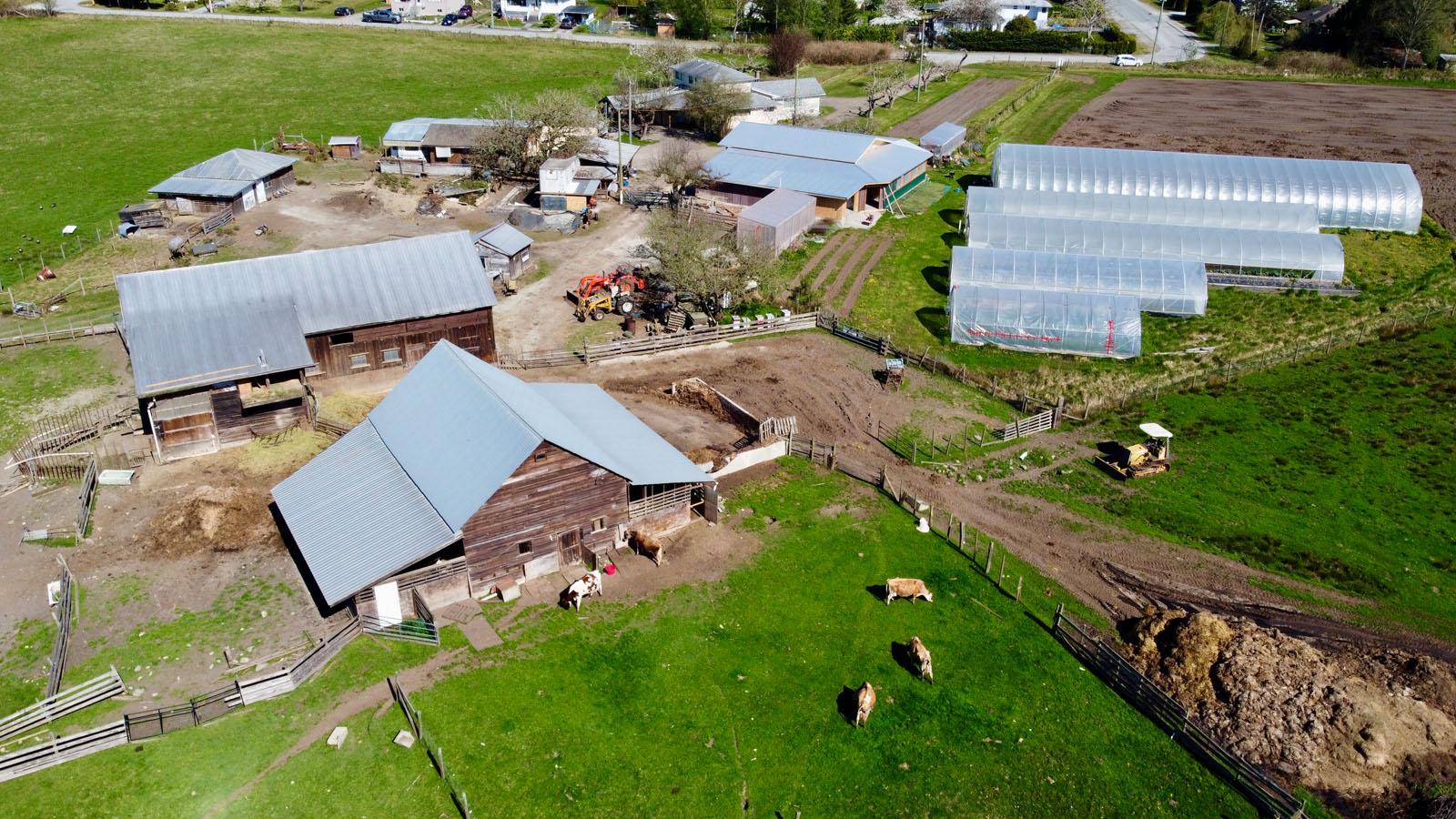Hatch a bird farm 08
