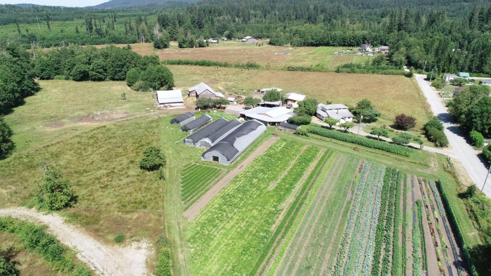 Hatch a bird farm 12