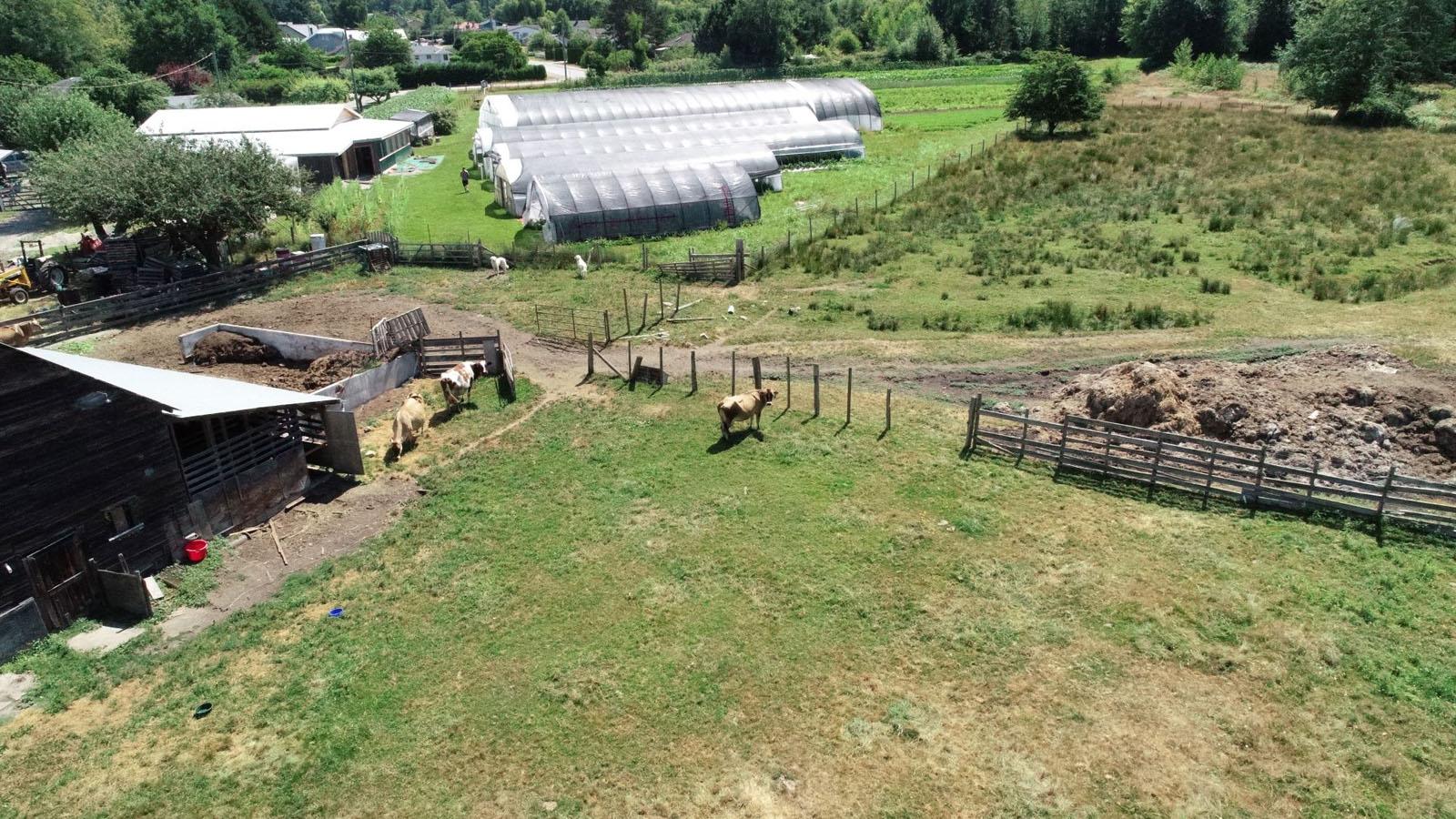 Hatch a bird farm 13