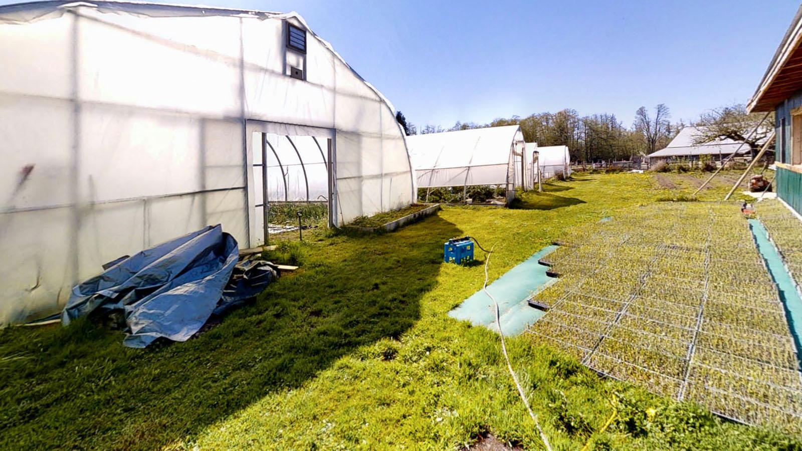 Hatch a bird farm 20