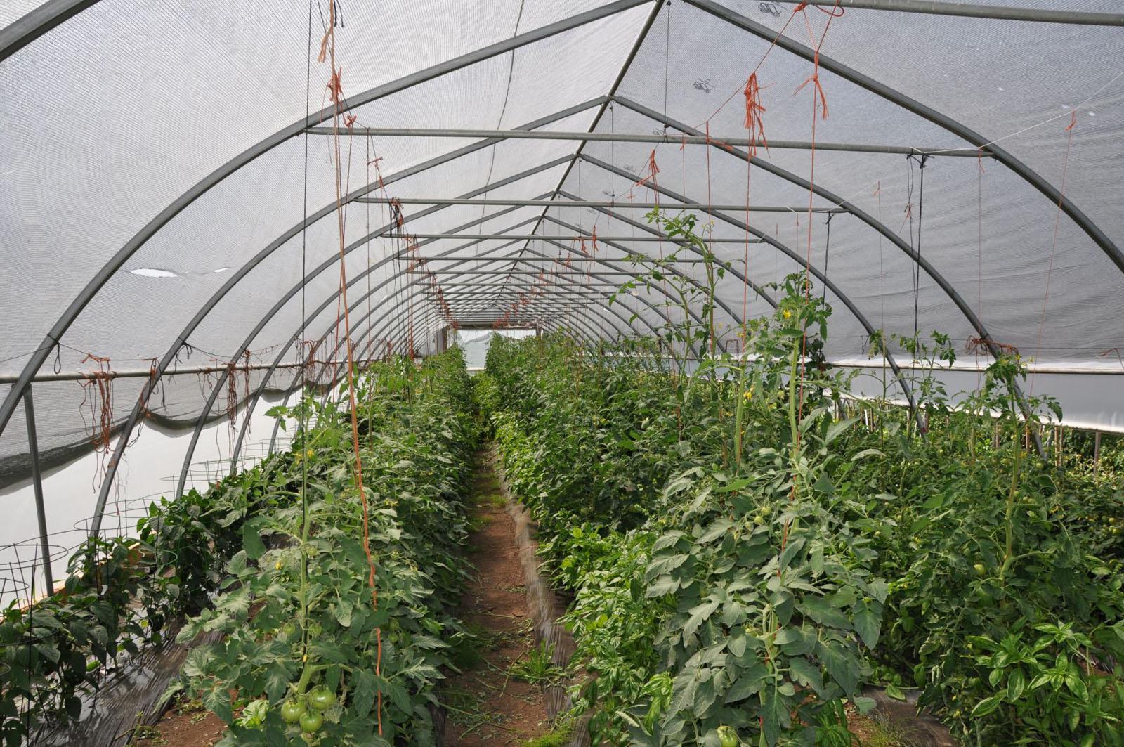 Hatch a bird farm 23