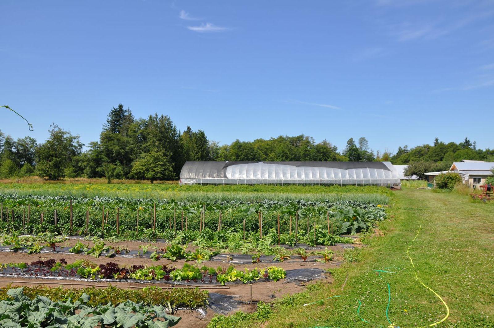 Hatch a bird farm 25