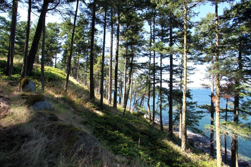 Sidney island 11