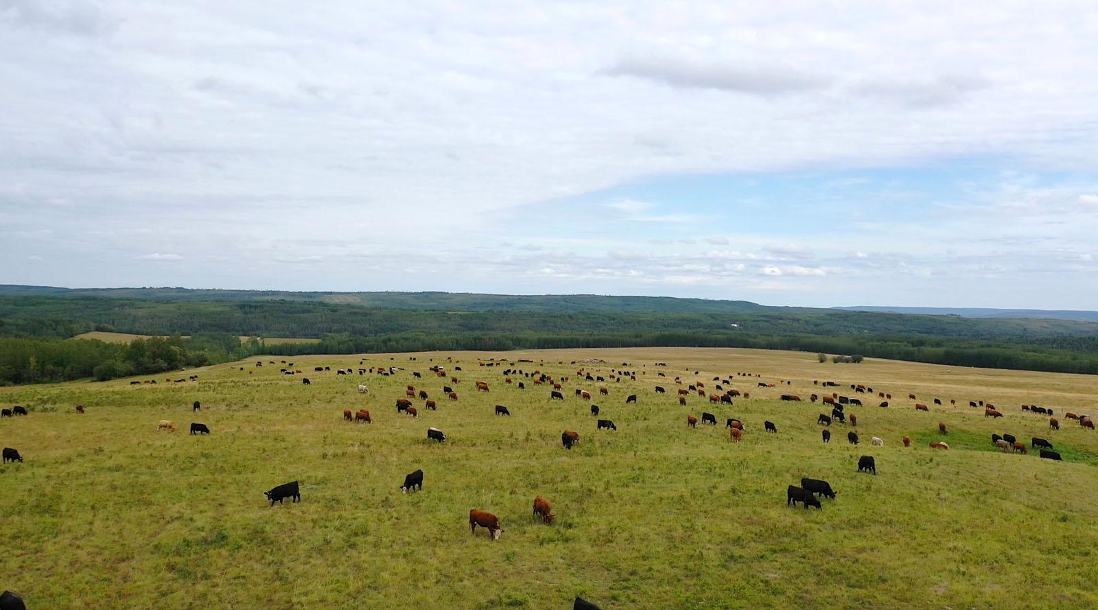 Dawson creek ranch 96