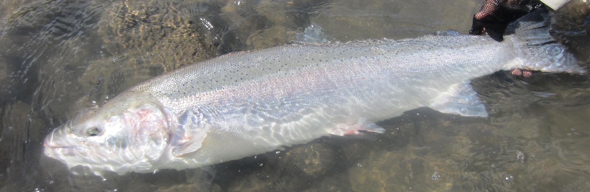 Kalum river lodge 36
