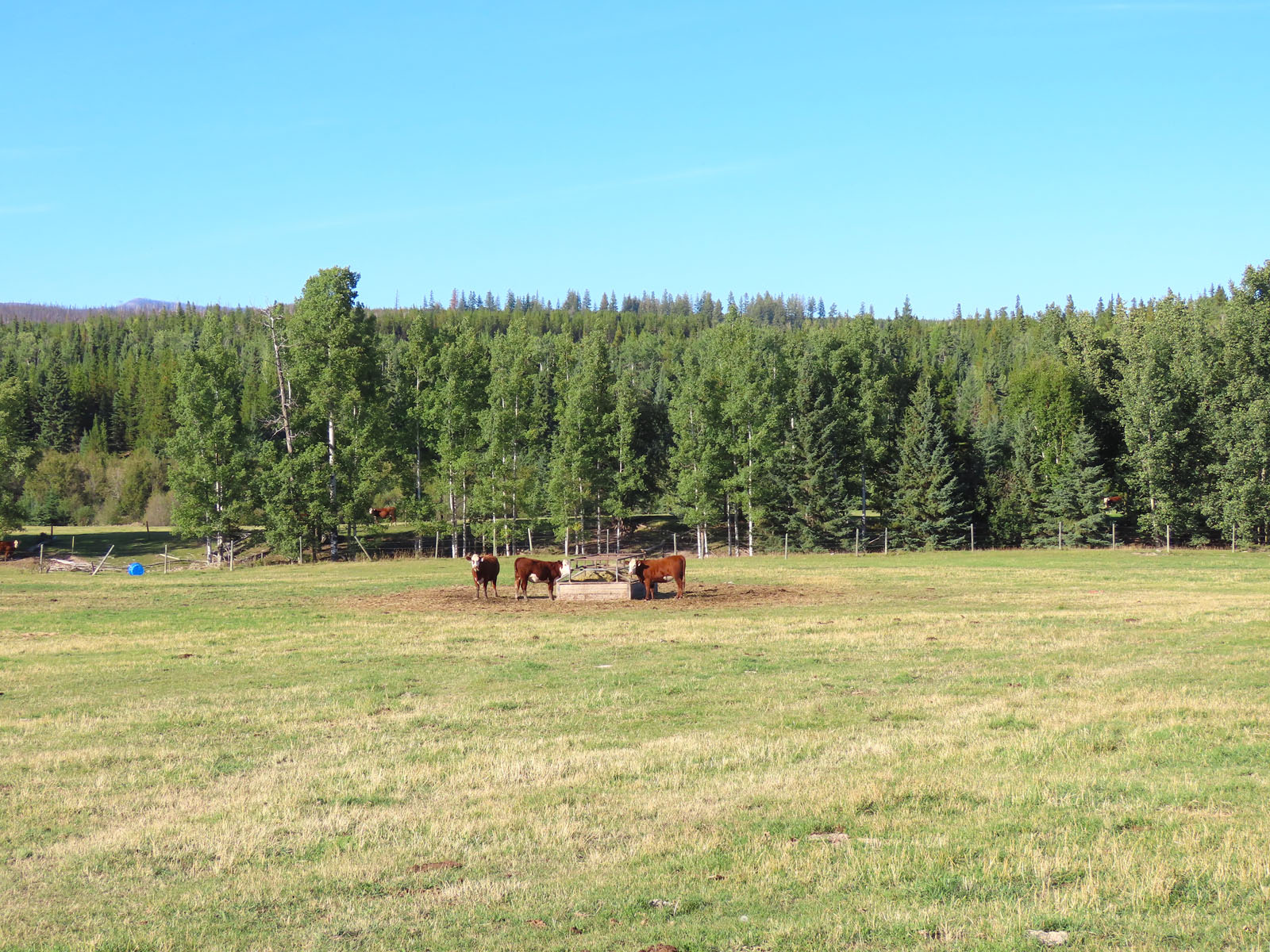 Lone fir ranch 051