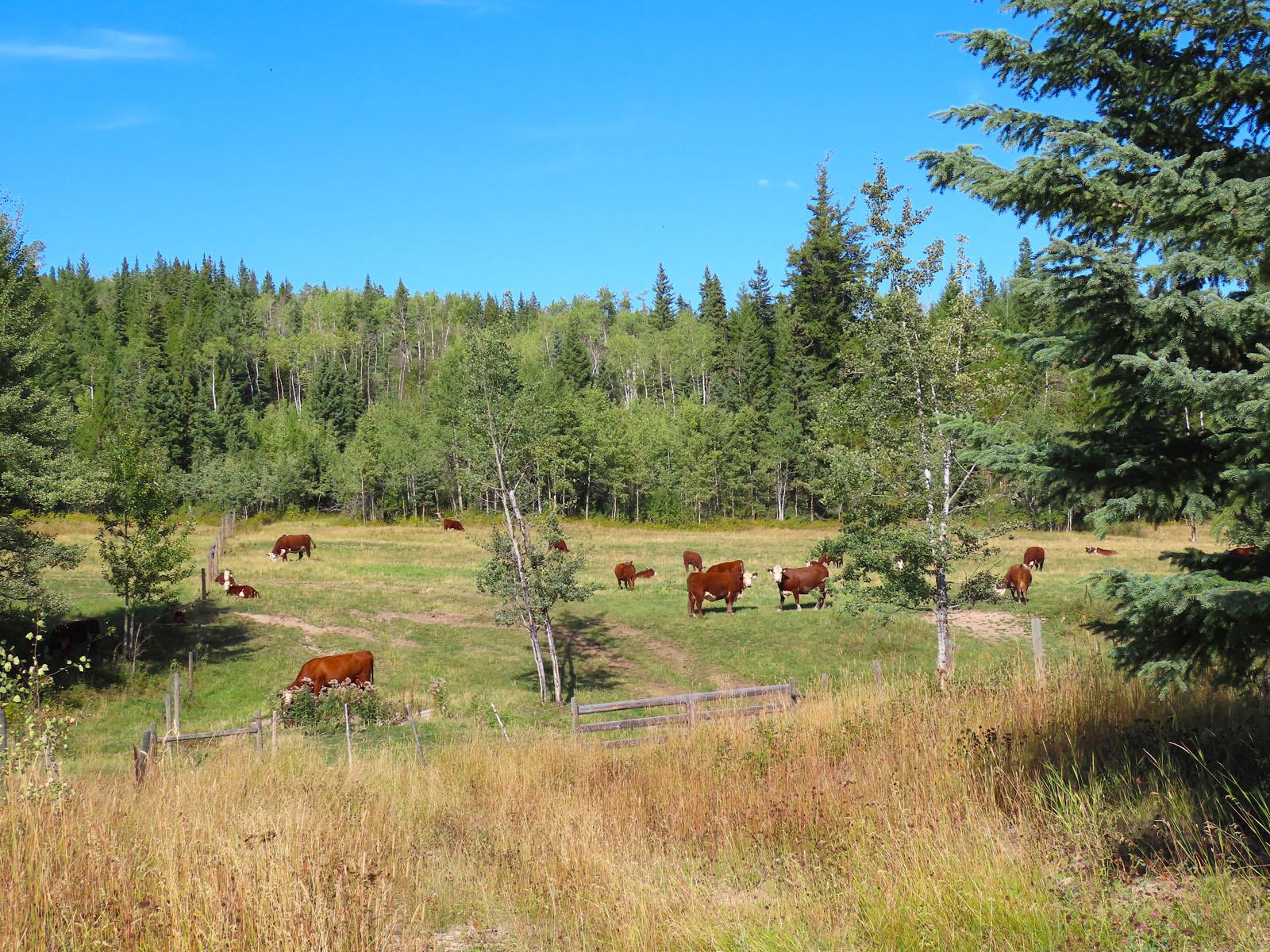Lone fir ranch 063