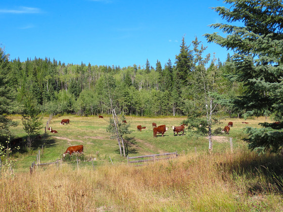 Thumb lone fir ranch 063
