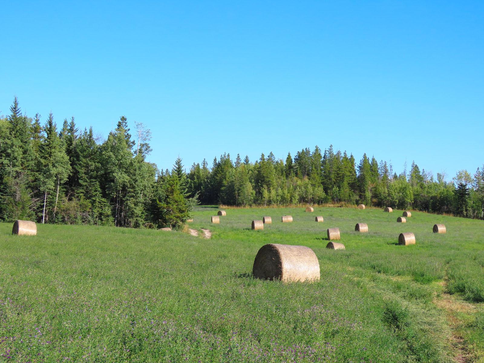 Lone fir ranch 065