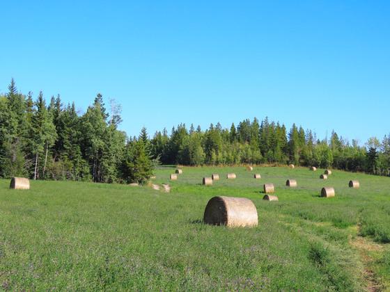 Thumb lone fir ranch 065
