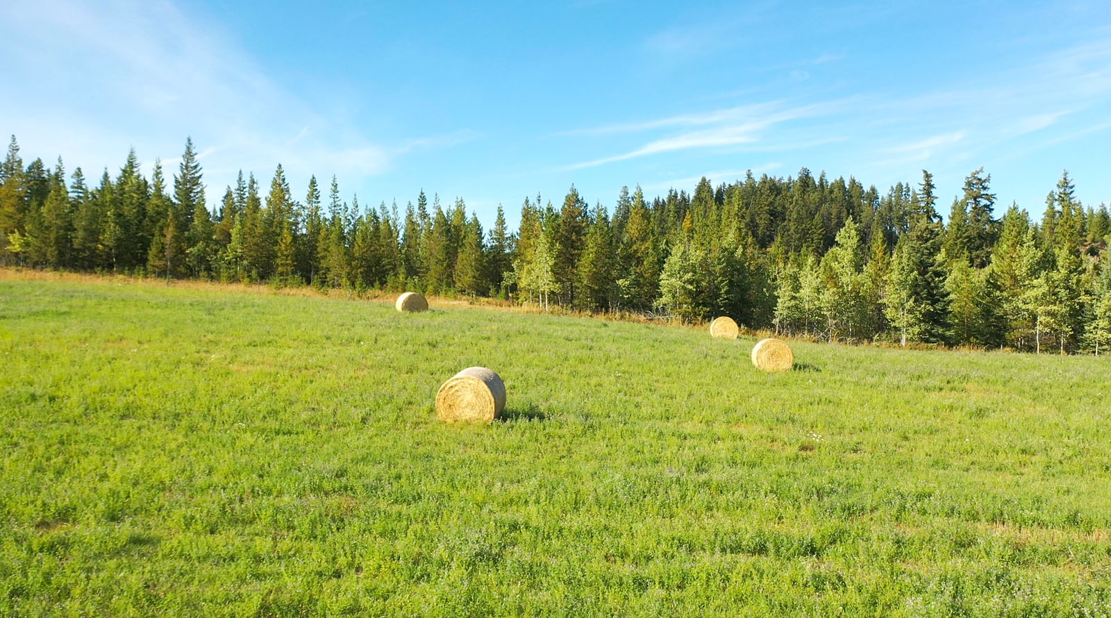 Lone fir ranch 066