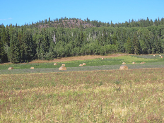 Thumb lone fir ranch 067