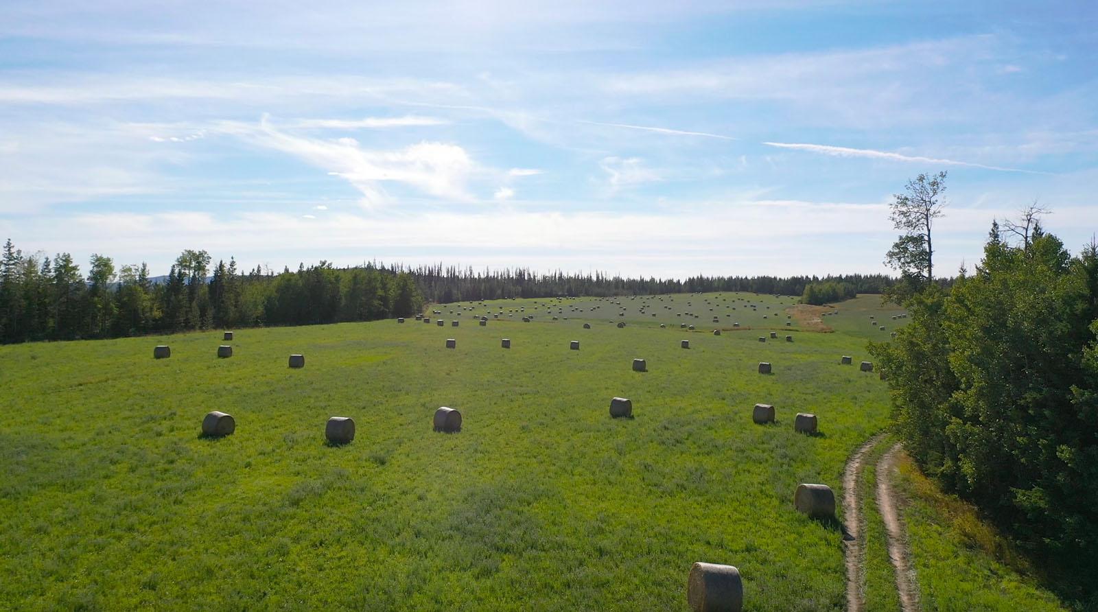 Lone fir ranch 068