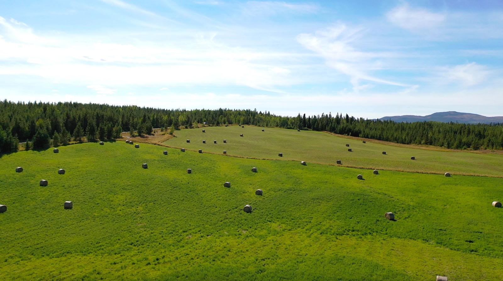 Lone fir ranch 069