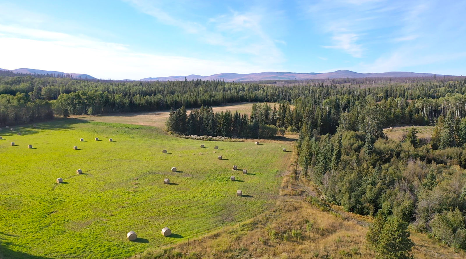 Lone fir ranch 070