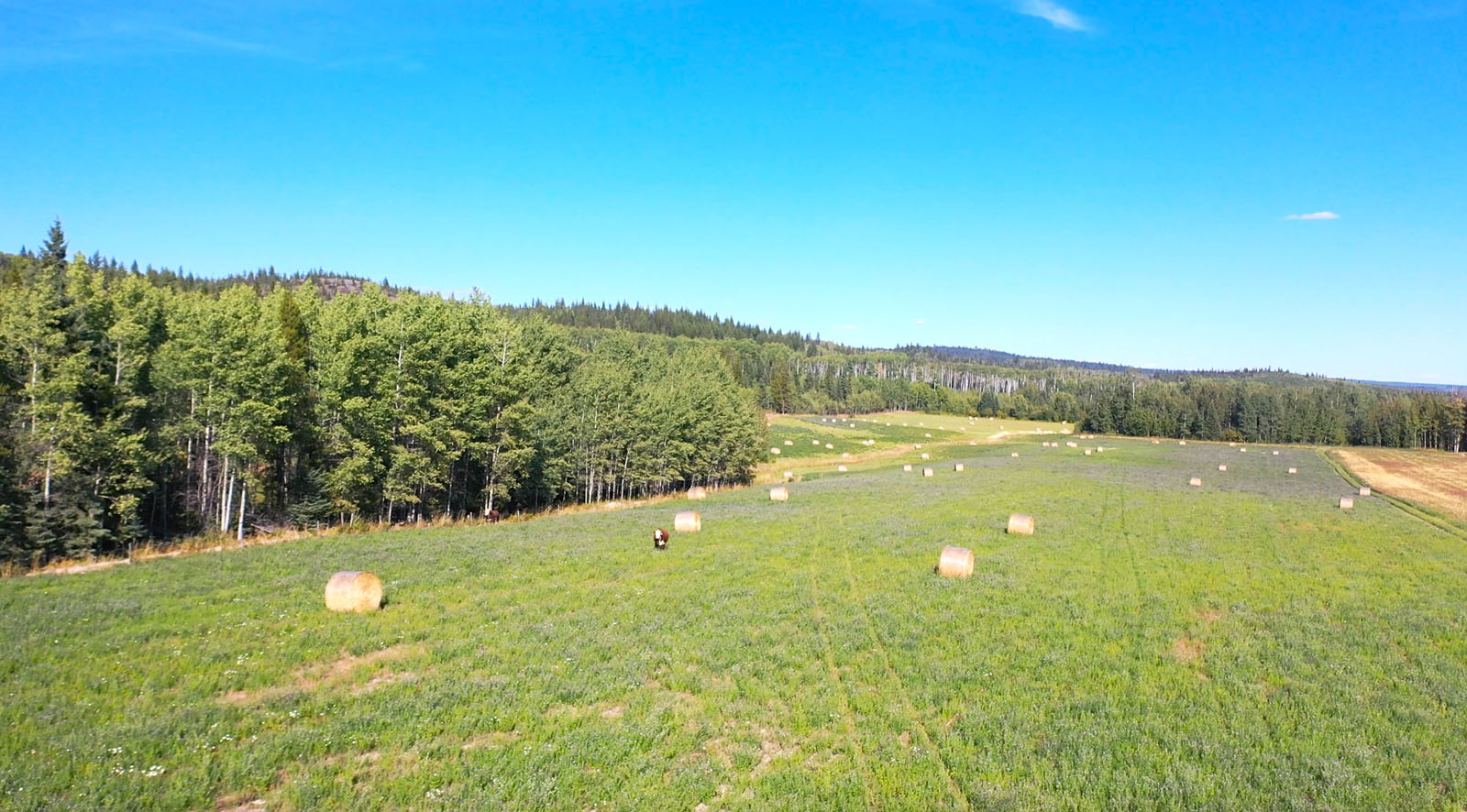 Lone fir ranch 071