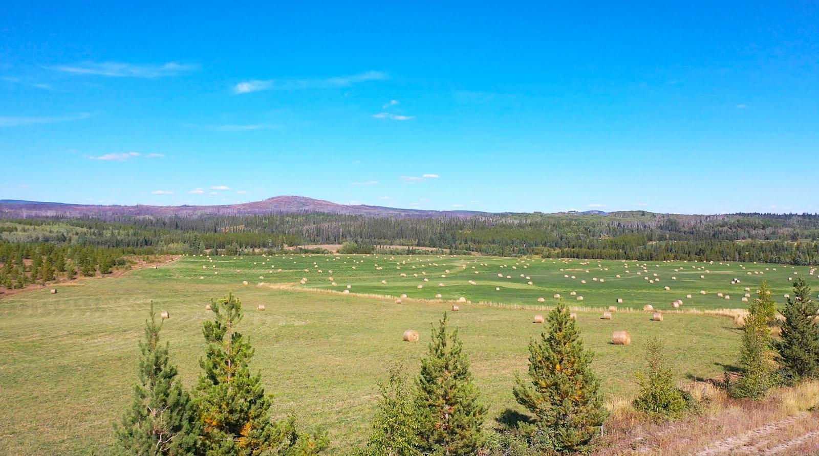 Lone fir ranch 072