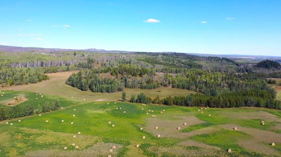 Thumb lone fir ranch 074