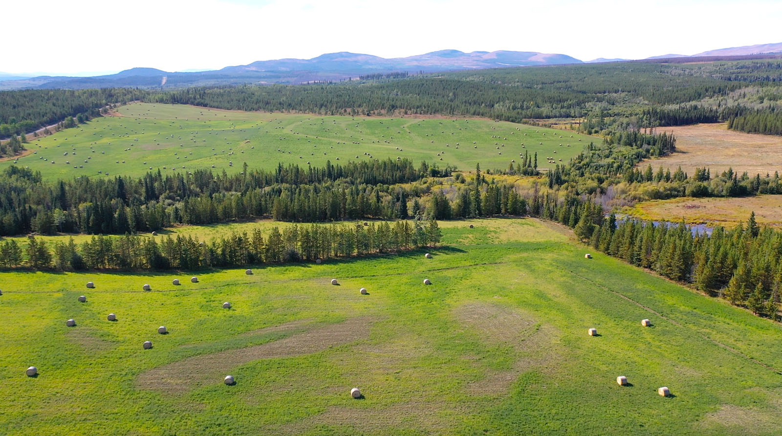 Lone fir ranch 077