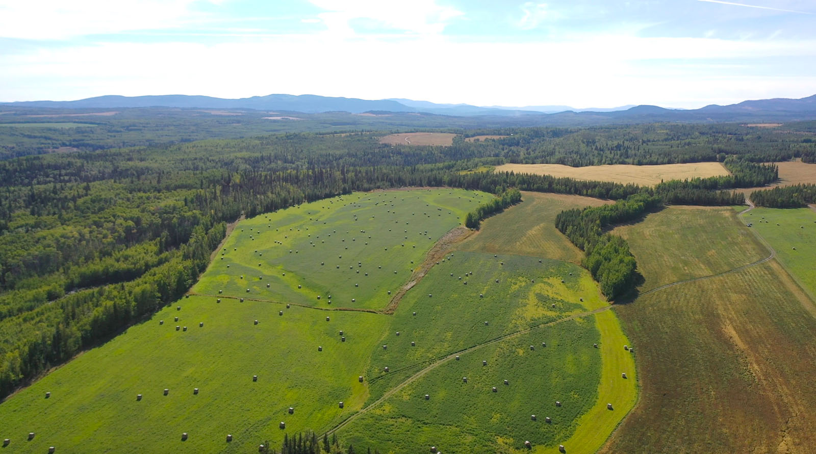 Lone fir ranch 079