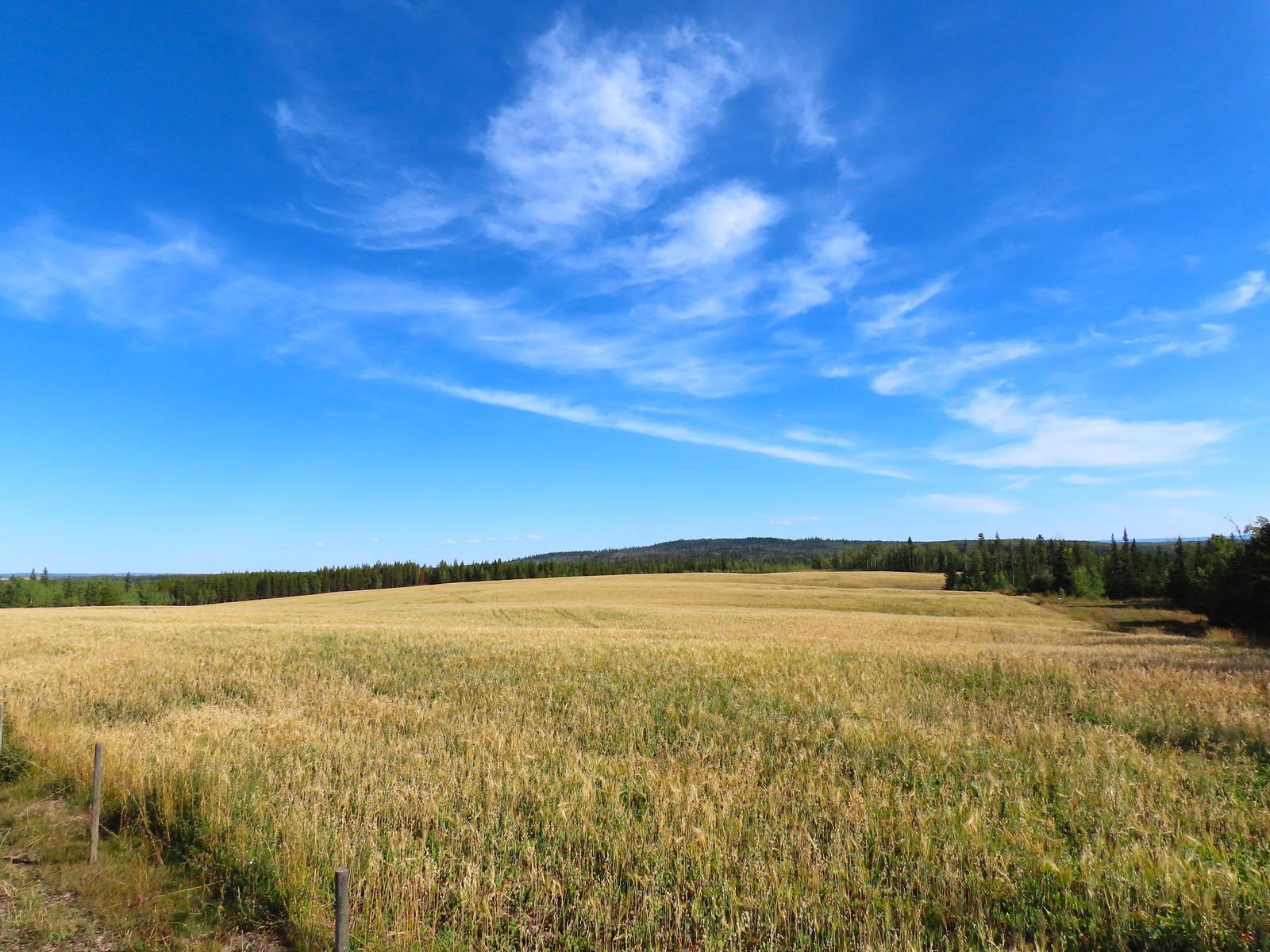 Lone fir ranch 081