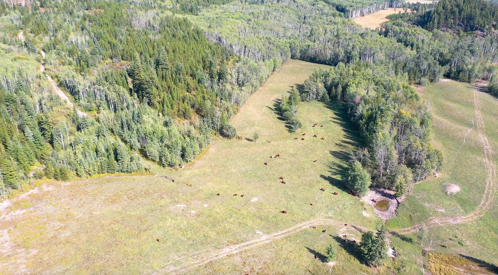 Lone fir ranch 102