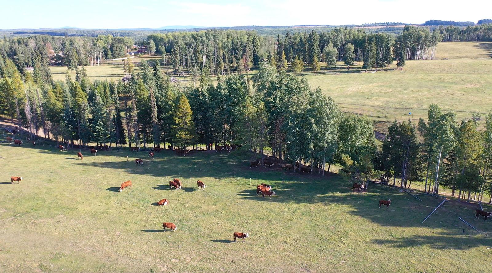 Lone fir ranch 103