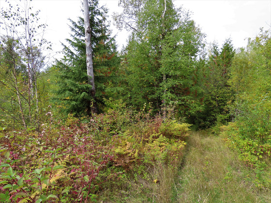 Thumb clearwater acreage 38