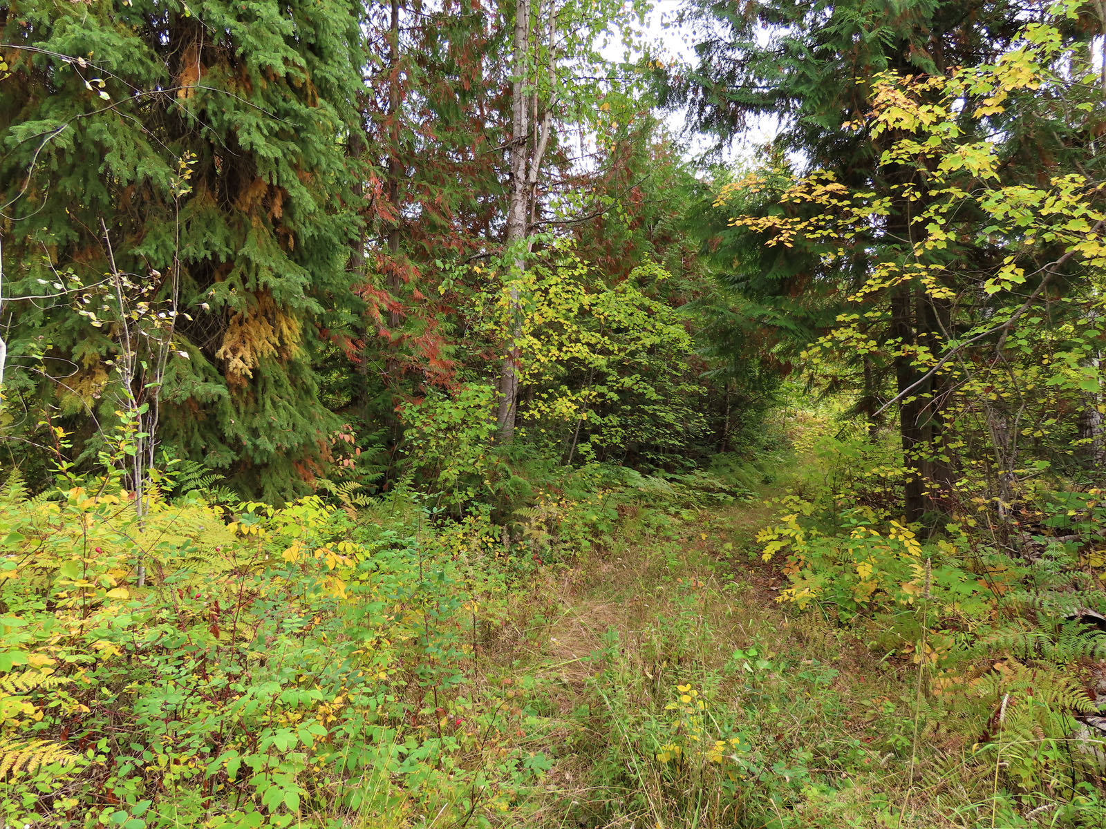 Clearwater acreage 42