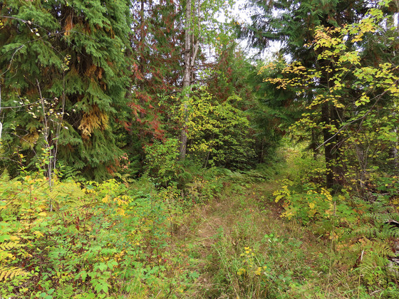 Thumb clearwater acreage 42